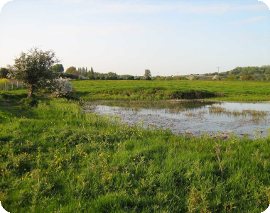Great crested newts habitat assessments